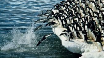 Water birds penguins iceberg jump wallpaper