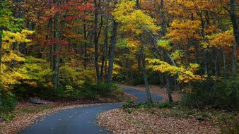 Yellow leaves gold roads country road forest Wallpaper