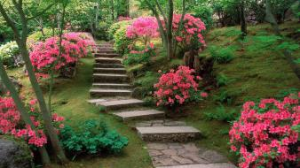 Azaleas japanese garden wallpaper