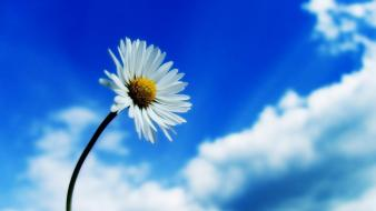 Beautiful sky white flower wallpaper