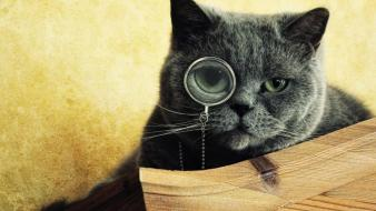 Cats animals gray glasses green eyes wallpaper