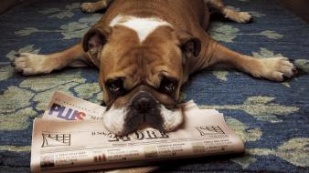 Floor animals dogs newspapers wallpaper