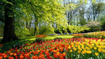 Flowers garden holland wallpaper