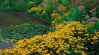 Flowers garden ponds ohio holden cleveland wallpaper