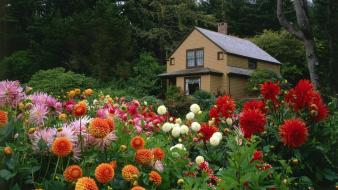 Flowers garden shore oregon house dahlias wallpaper