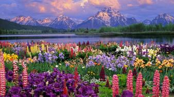 Flowers grand wyoming wildflowers Wallpaper