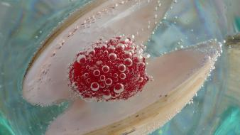 Frozen pearls raspberries berry pearl paint Wallpaper