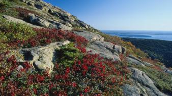 Landscapes flowers maine national park foliage blueberry acadia wallpaper