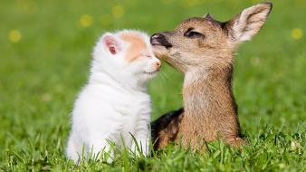 Animals cats deer friendship little wallpaper