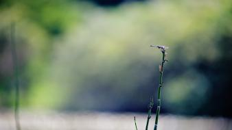 Blurred background bokeh depth of field nature plants Wallpaper