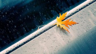 Cars leaves water drops macro car windows wallpaper