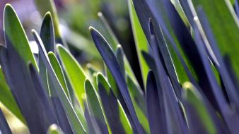 Close-up nature leaves grass plants bokeh macro wallpaper