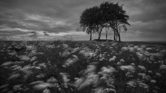 Clouds landscapes trees meadows grayscale Wallpaper
