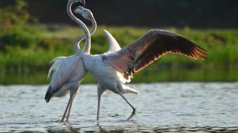India national geographic birds flamingos landscapes wallpaper