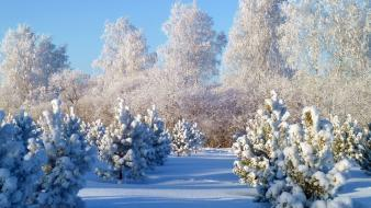 Landscapes natural scenery nature snow snowy trees wallpaper