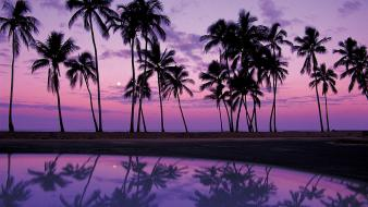 Oahu palm trees reflections sunset wallpaper