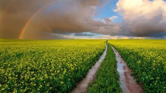 South africa clouds fields flowers landscapes wallpaper