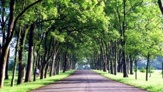 Taiwan green roads trees wallpaper