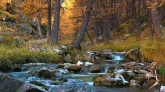Trees yellow forests grass golden morning creek wallpaper