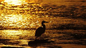 Water birds silhouettes bokeh sunlight egrets seashore wallpaper