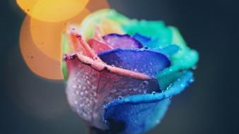 After colors flowers rain wallpaper