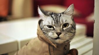 Animals cats funny hipster wallpaper