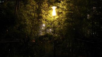 Bamboo garden roads street lights wallpaper
