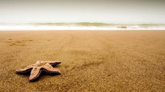 Beaches sand seastars wallpaper