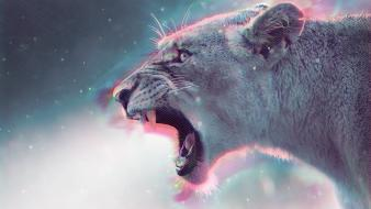Cats animals puma soul colors sparkle Wallpaper
