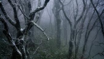 Dawn dead tree fog forests frost wallpaper