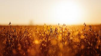 Depth of field evening fields nature sunlight wallpaper