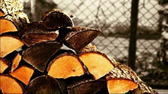 Firewood lumber nature plants trees wallpaper