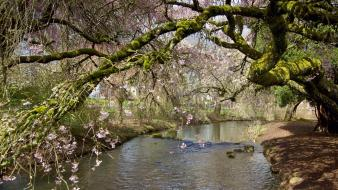 Flowered trees moss pink flowers rivers wallpaper