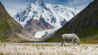 Flowers horses landscapes moss mountains wallpaper