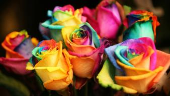 Flowers multicolor nature roses Wallpaper