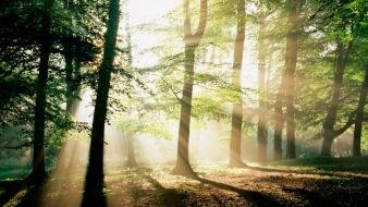 Forest morning sunshine wallpaper
