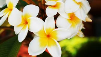 Hawaiian flowers wallpaper