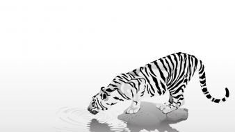 N artwork black white tiger wallpaper