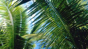Nature palm leaves trees wallpaper