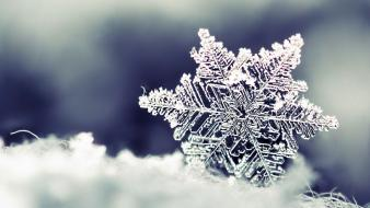 Snowflake macro wallpaper