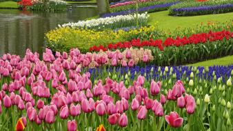 The netherlands garden spring Wallpaper