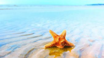 Animals aquatic sea starfish Wallpaper