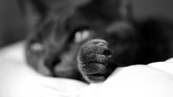 Animals cats depth of field monochrome paw wallpaper