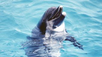 Animals dolphins nature water wallpaper