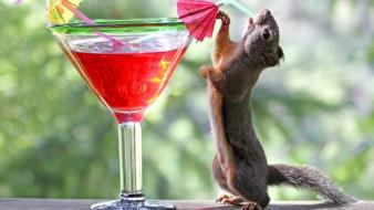 Animals drinks wallpaper