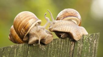 Animals fences molluscs snails wallpaper
