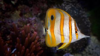 Animals fish nature tropical wallpaper