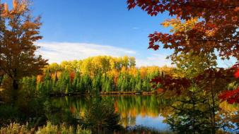 Autumn bloom nature wallpaper