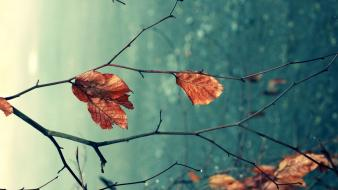 Autumn leaves natural Wallpaper