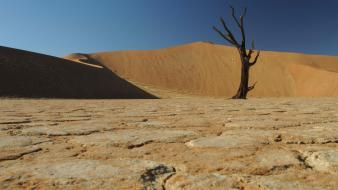 Barren deserts trees web wallpaper